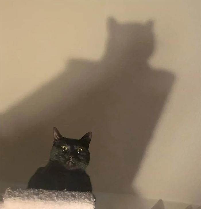menacing kitty with batman shadow
