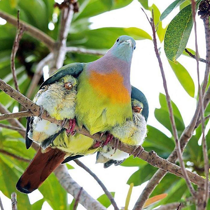 mother bird and her babies