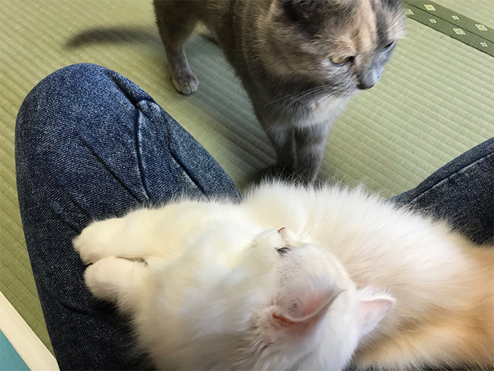 my cat yugawara guests share room with cats