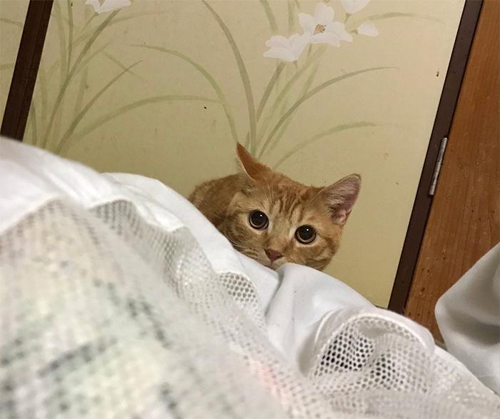 my cat yugawara inn trial package