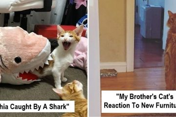 overdramatic cats
