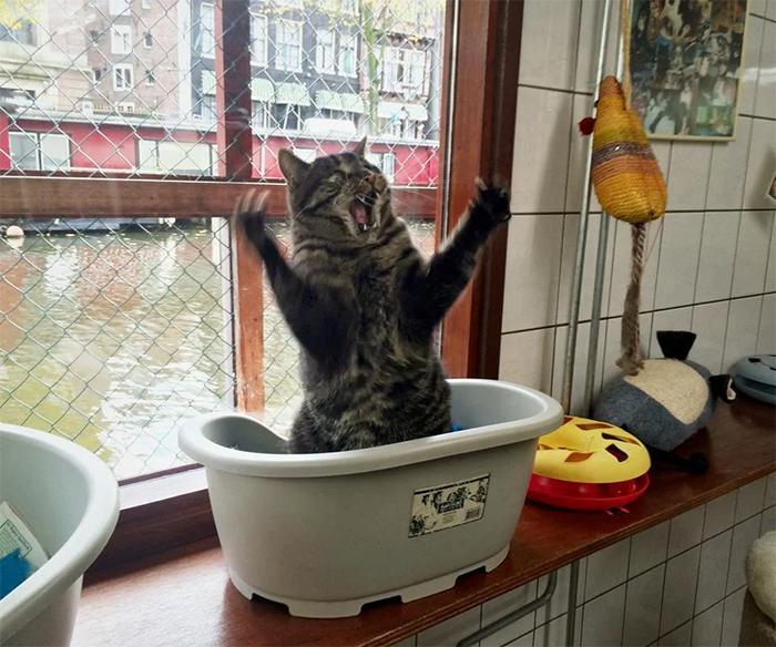 overdramatic cats amsterdam