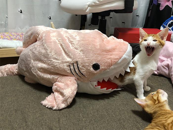 overdramatic cats eaten by plush shark