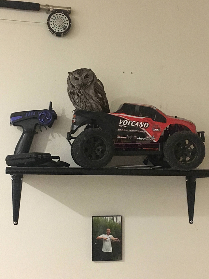 owl standing on a remote controlled car