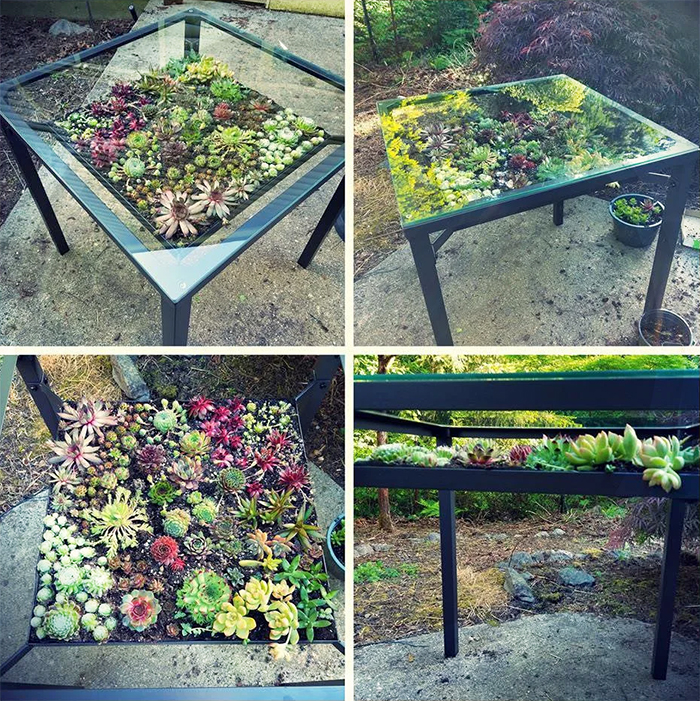 patio table succulent gardens
