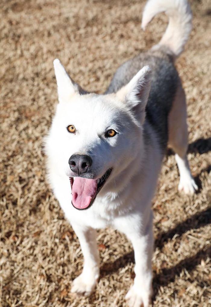 rescue dog finn healthy