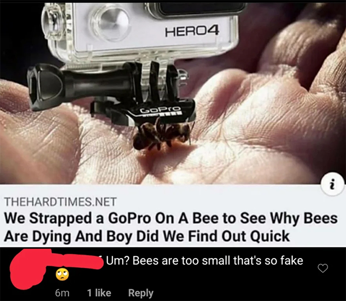salty satire dying bees