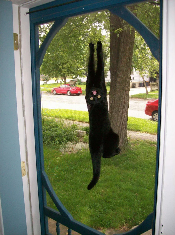 spidercat hanging on the door