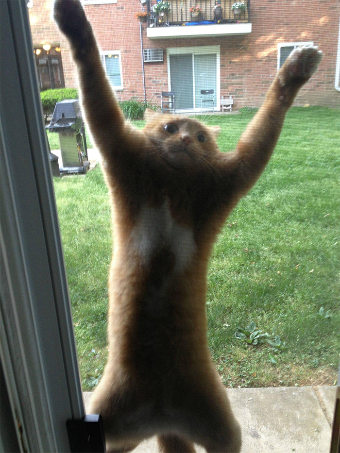 spidercat holding onto screen door