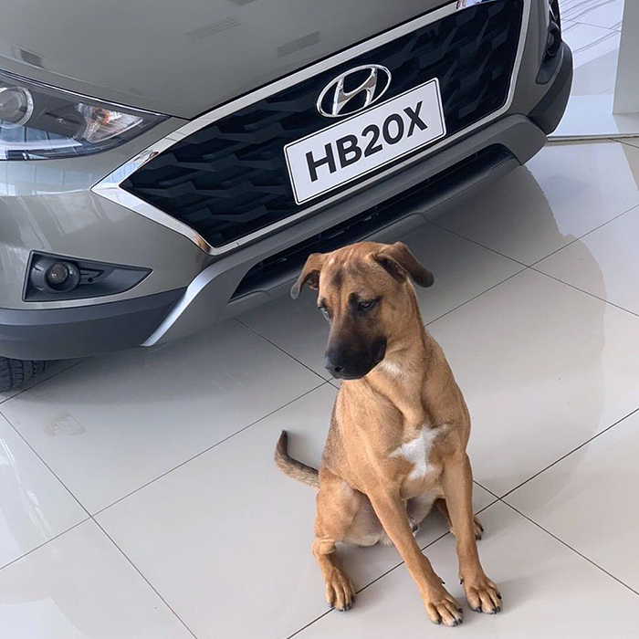 stray dog employed by hyundai brazil