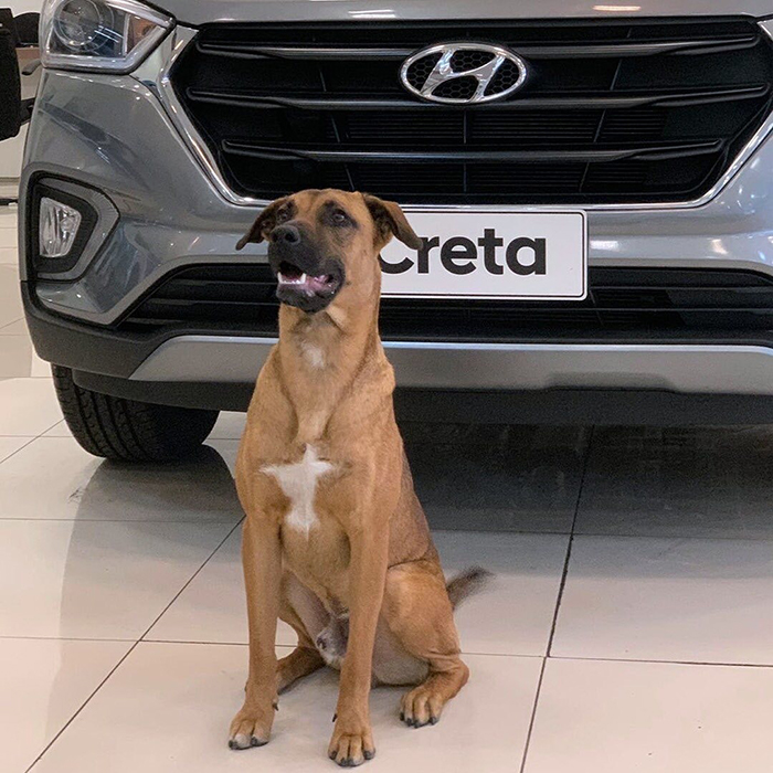 stray dog tucson prime employed by hyundai brazil
