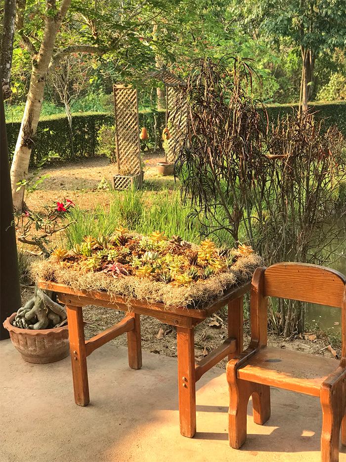 succulent gardens table
