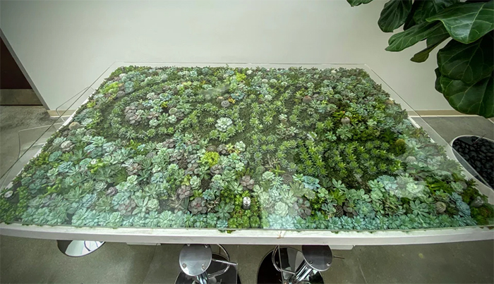 tables that double as succulent gardens