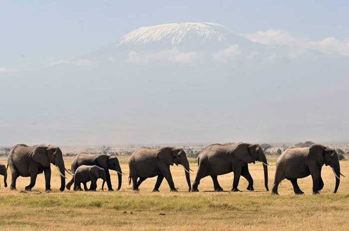 the elephant population in kenya has doubled