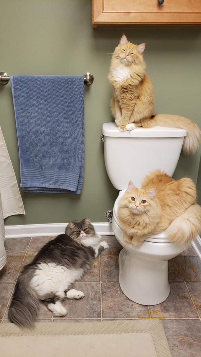 three cats in the bathroom