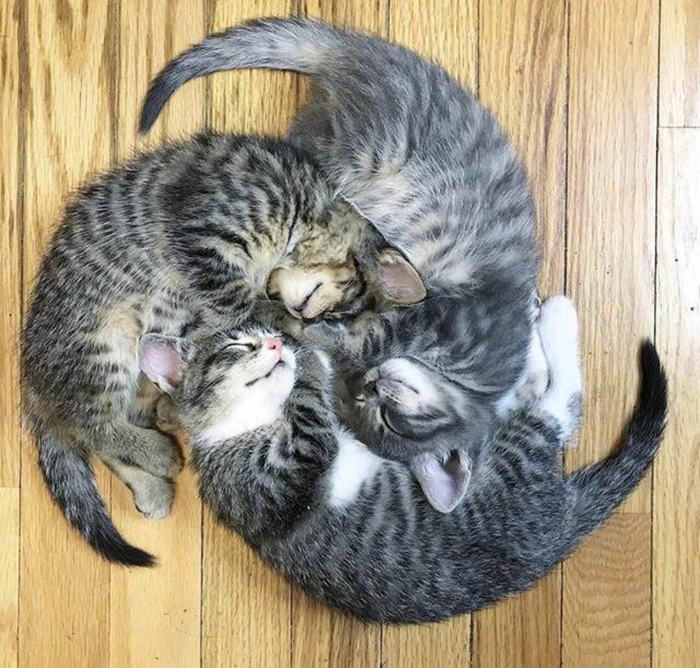 three cats sleeping in a wheel-like formation