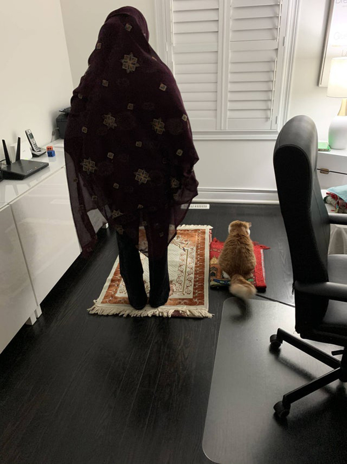 wholesome cat posts cat accompanying a woman while praying