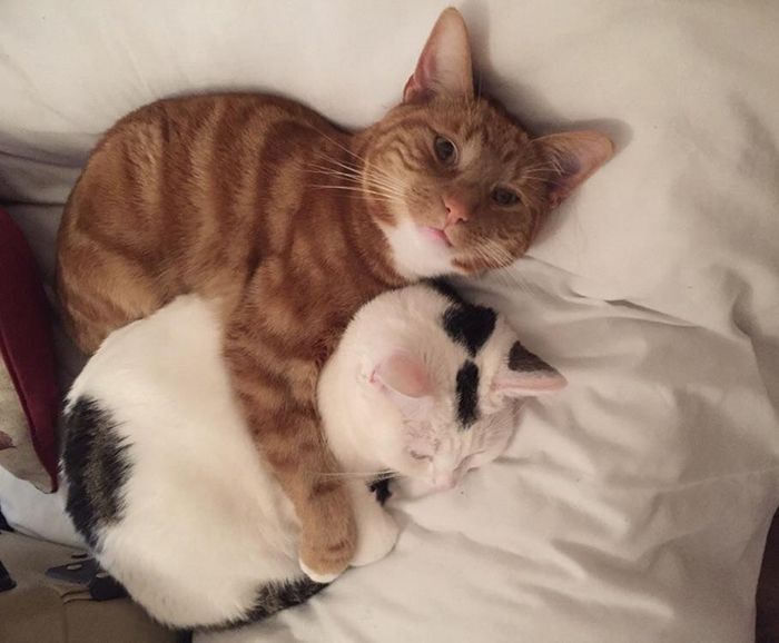 wholesome cat posts cat cuddling another cat