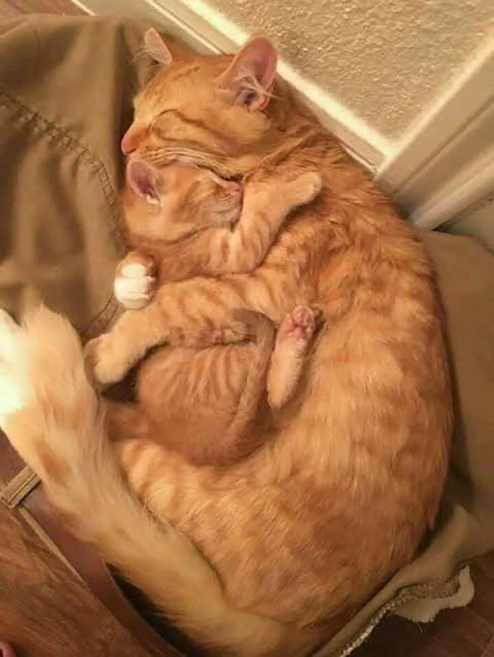 wholesome cat posts cat cuddling its baby while sleeping