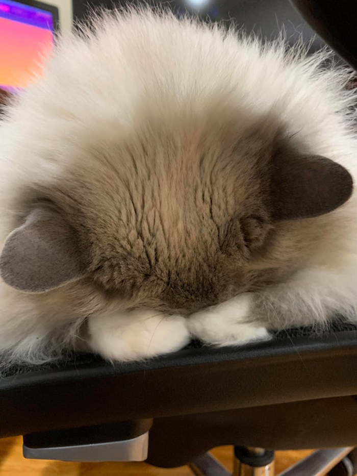 wholesome cat posts cat looks like bowing while sleeping