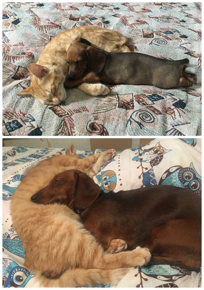 wholesome cat posts dog and cat sleeping beside each other