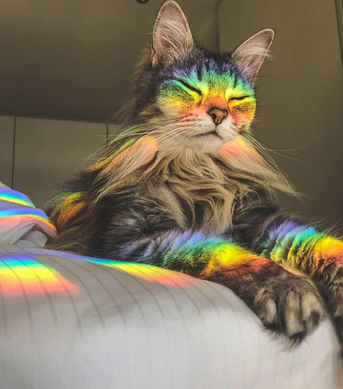 wholesome cat posts light refraction on a cat