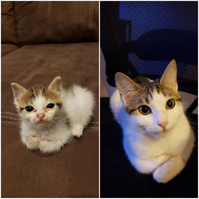wholesome cat posts rescue cat before and after