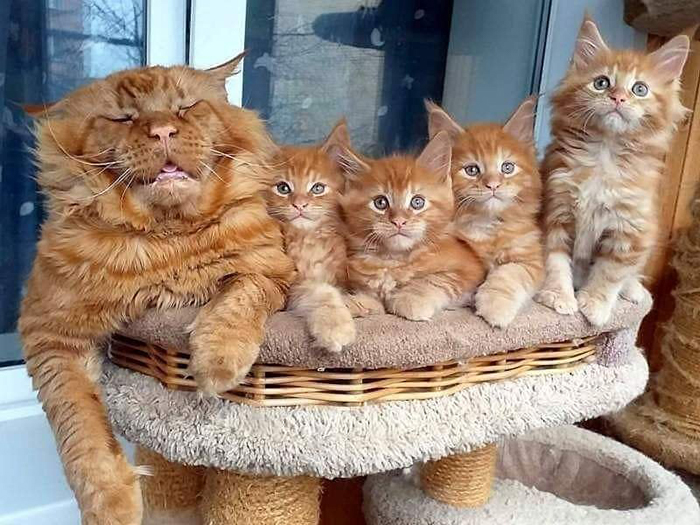 wholesome cat posts sleeping cat with four kittens