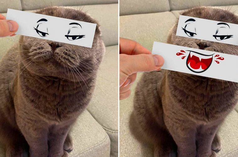 Funny cat expressions