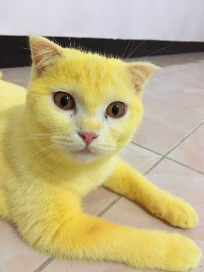 Ka-Pwong doesn't realize that its fur has turned yellow