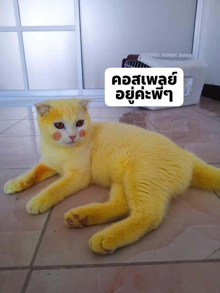 Ka-Pwong with photoshopped blush marks