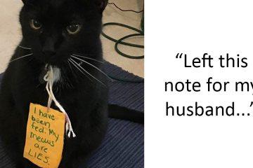 Naughty pets