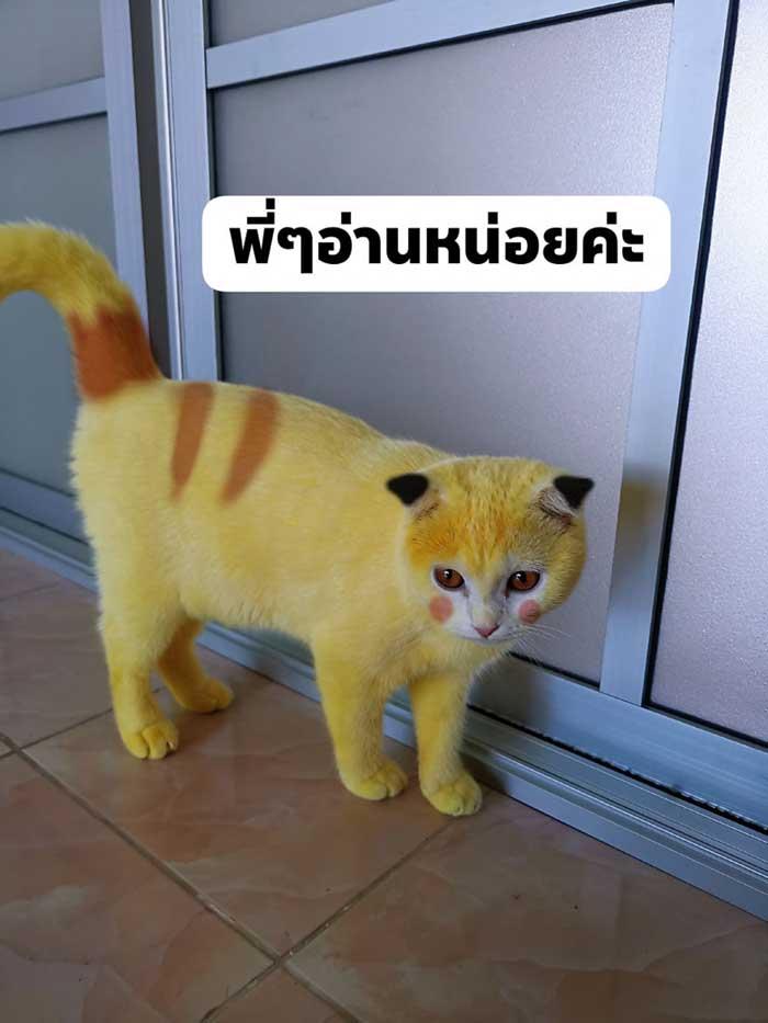 Thammapa photoshopped her cat to look more like Pikachu
