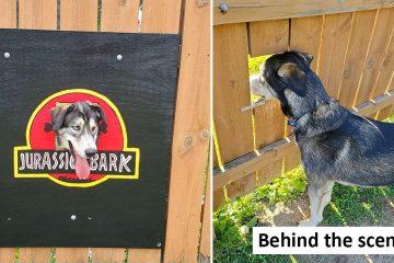 The dog fence