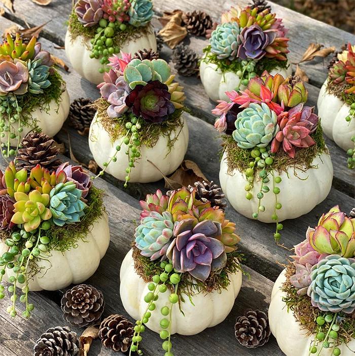 adorable succulent pumpkins