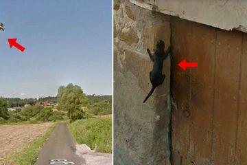 animals on google maps
