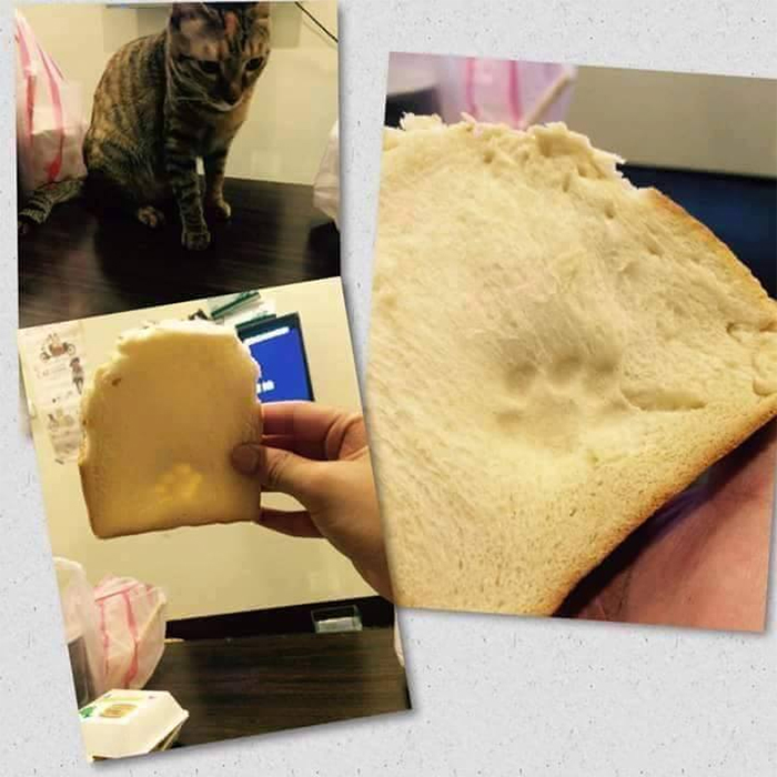 bread slice with cat paw print