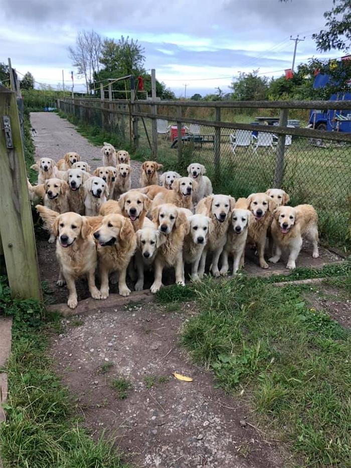 canine gate