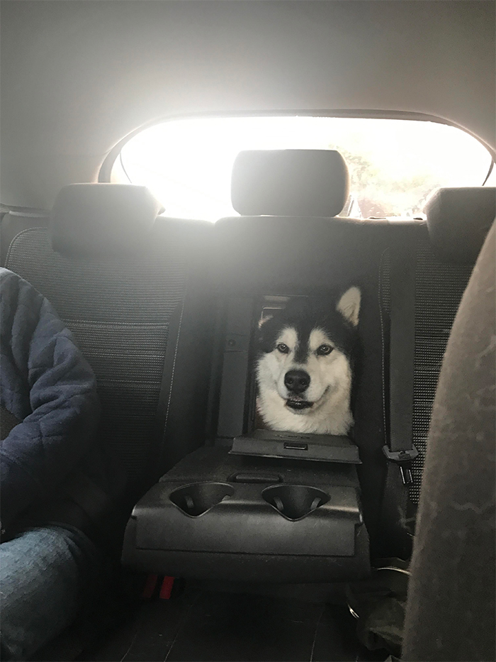 car with built-in doggo window