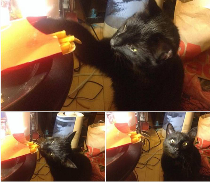 cat stealing fries from table