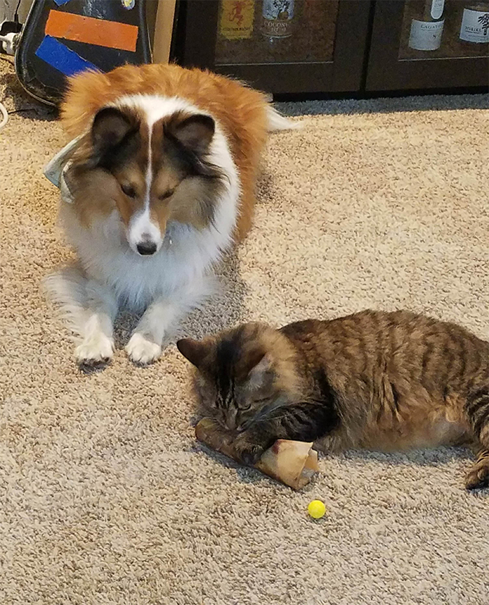 cats and dogs compete over bone