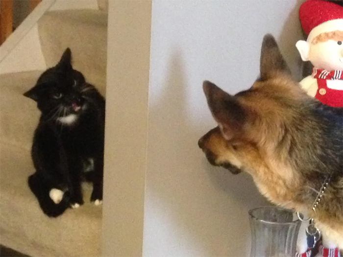 cats and dogs first meeting