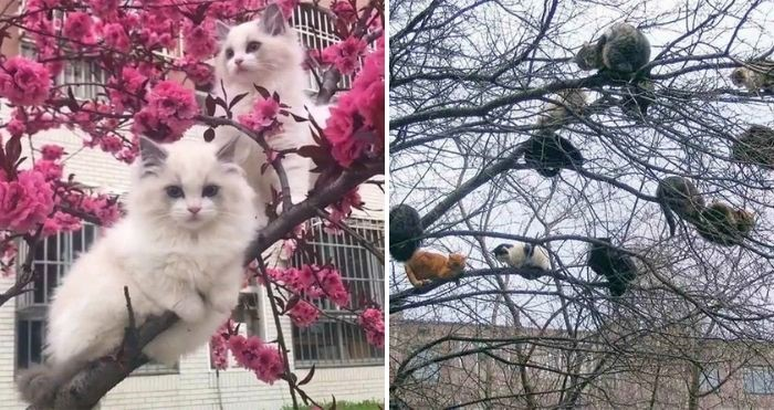 cats sat in trees