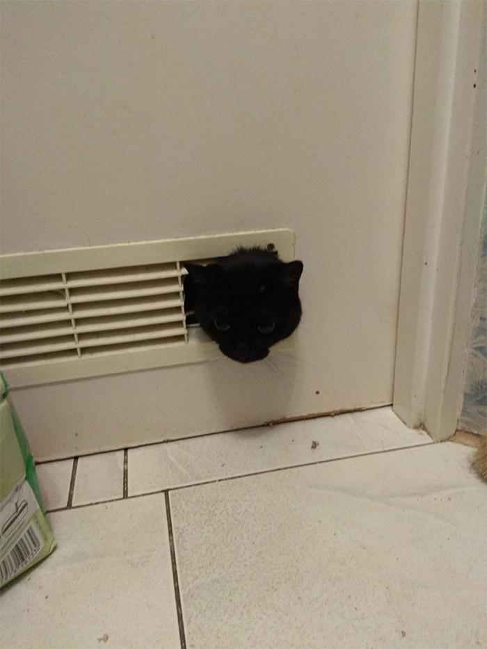 cats destroying bathroom doors