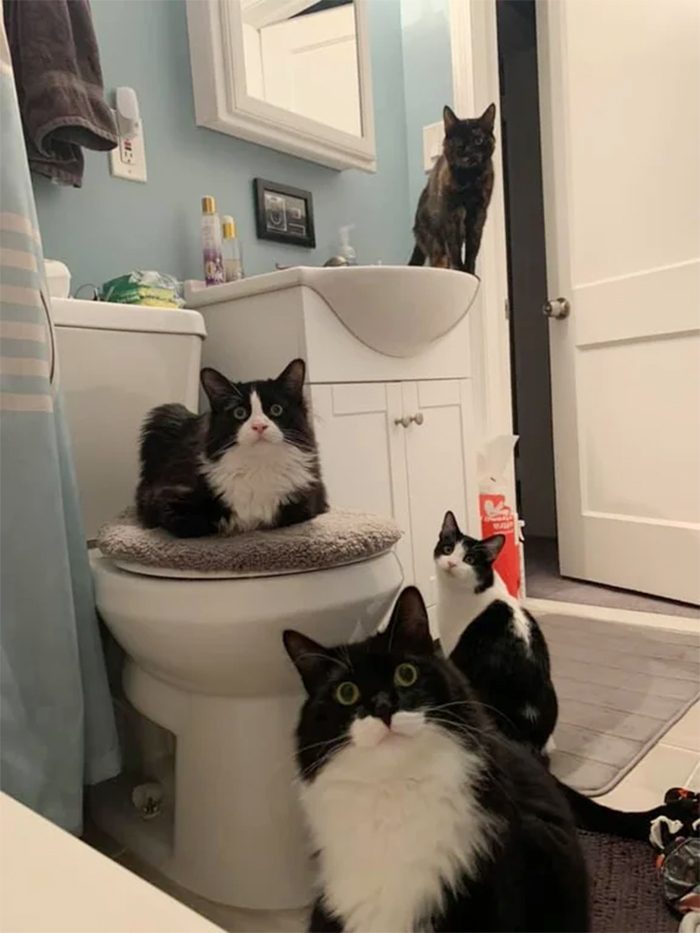 cats following owners to the bathroom