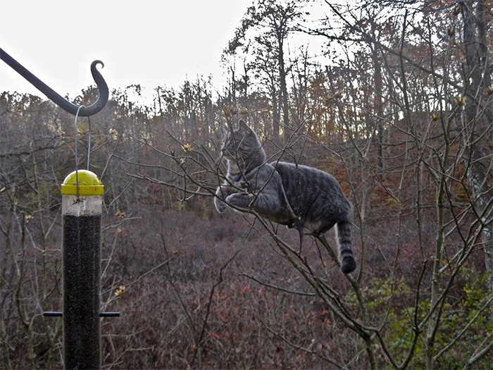 cats in trees watching the bird feeder