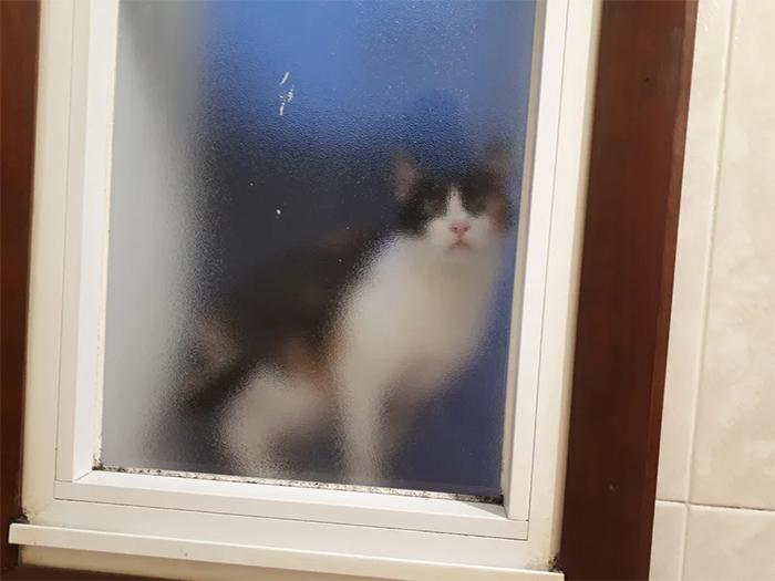 cats looking through the bathroom door