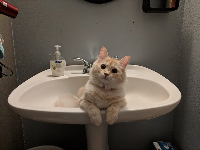 cats lounging on bathroom sink