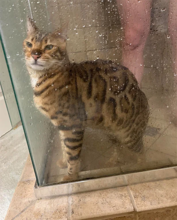 cats love to shower with human