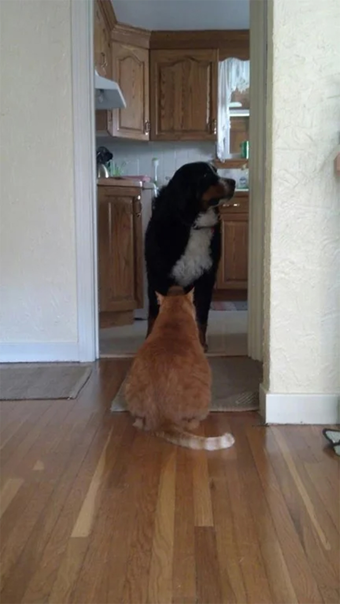 cats not letting dogs pass